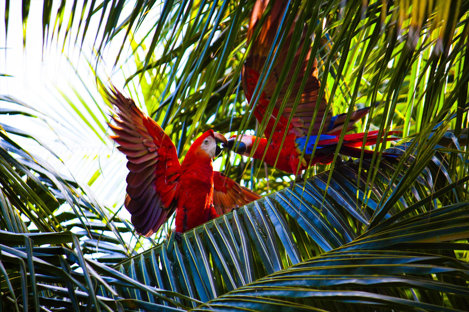 natureza-rio-de-janeiro-brasil