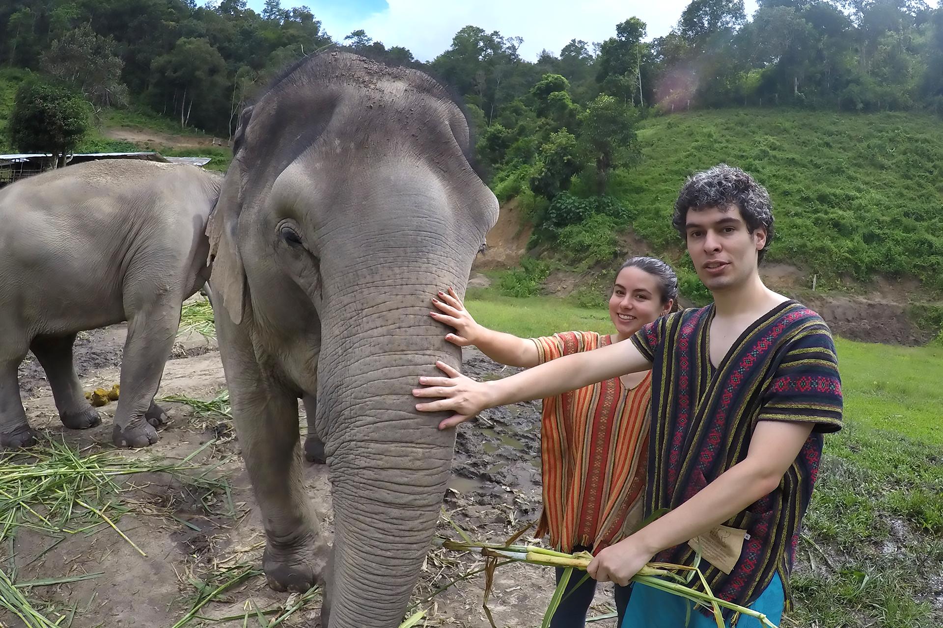 santuario-de-elefantes-em-chiang-mai